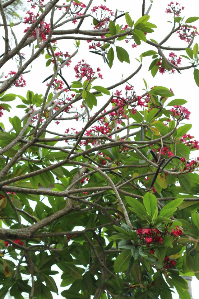 Flores na vila