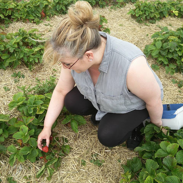 Picking my own strawberries at Hill Farm PYO