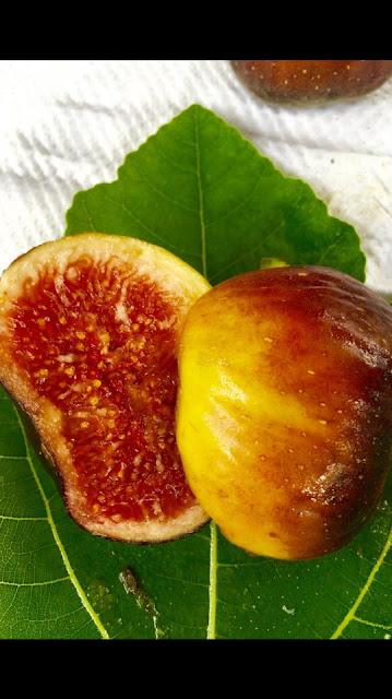 ALGERINA Figs