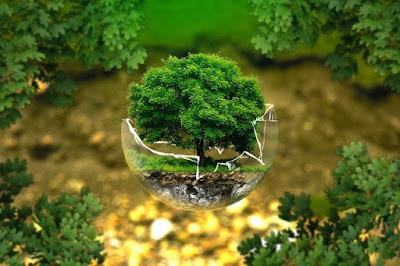 पर्यावरण संवर्धन काळाची गरज मराठी निबंध paryavaran samvardhan
