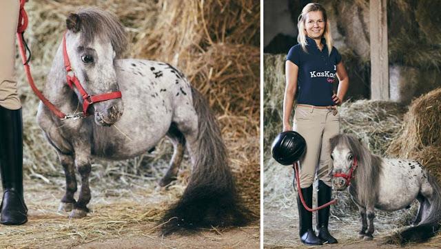ये है दुनिया का सबसे छोटा घोड़ा, गिनीज़ बुक में नाम शामिल - newsonfloor.com