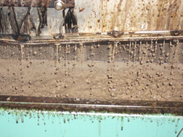 οι ελιές πάνε στο λιοτρίβι