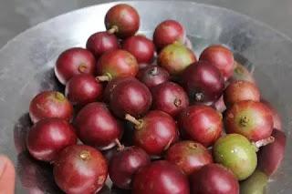 buah rekem