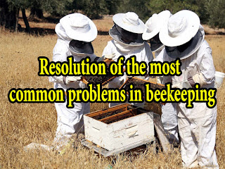 Beekeeping problems