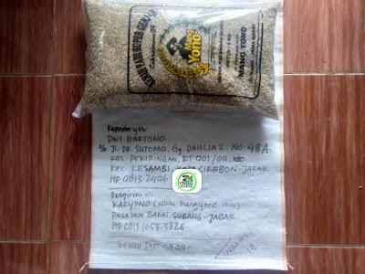 Benih Padi Pesanan   DWI HARTONO Cirebon, Jabar.    (Sebelum di Packing).