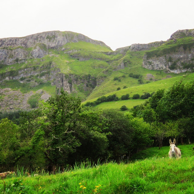 Donkey on a hill in County Sligo, Ireland