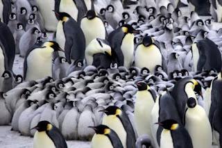 Colonia Pingüinos