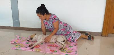 Hund nach der Operation
