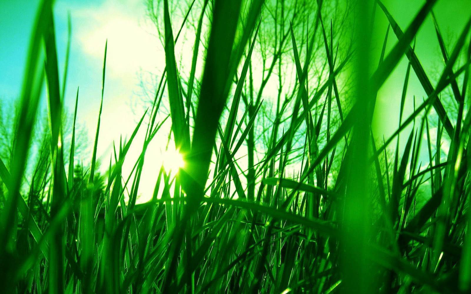Gras Achtergronden  HD Wallpapers