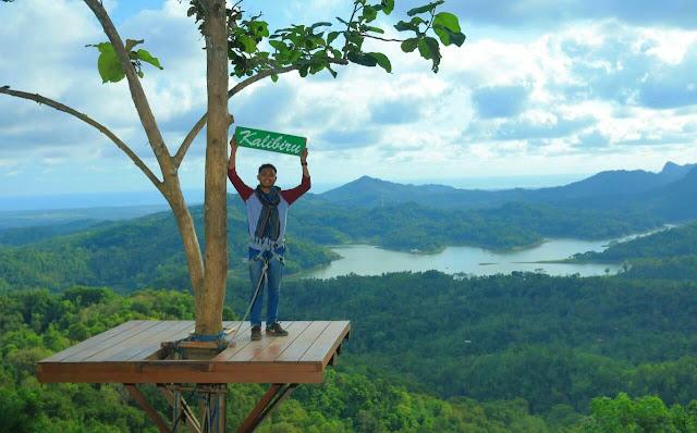 Di atas pohon wisata kalibiru kulon progo indonesia
