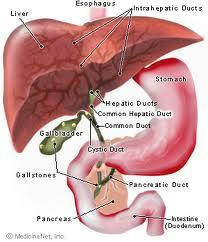 Cara ampuh menyembuhkan liver