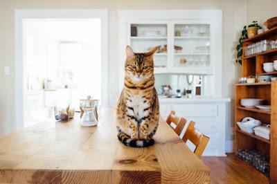 leche, gatos