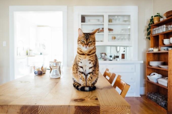¿Por qué la leche es intolerante para los gatos?