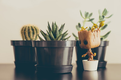 A figurine of the Marvel Comics character Groot standing next to cacti and succulents in brown pots.