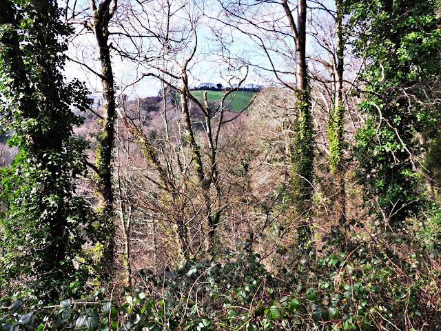 Kings Woods, Pentewan, Cornwall