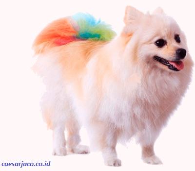 Vitamin Bulu Anjing: Beberapa Jenis Penyakit Kulit Anjing yang Perlu Anda Ketahui