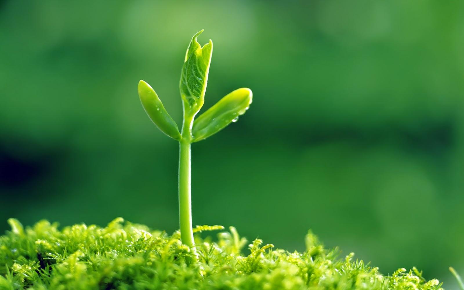 plant natural human