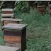 Avanço da soja cria 'cemitério de colmeias' no interior do Pará