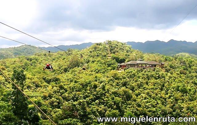 Atravesando-arboles-Bohol