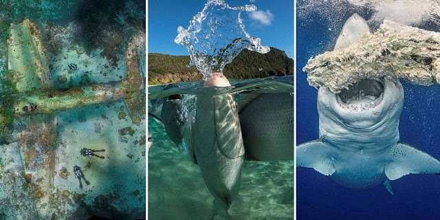 Contest Winners of Underwater Photography 2020