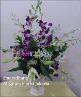 Dendrobium Ungu Jakarta Indonesia