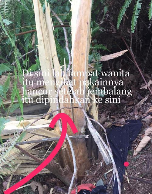 Pokok Meletup & Tumbang Selepas Rawatan Pindah Jembalang
