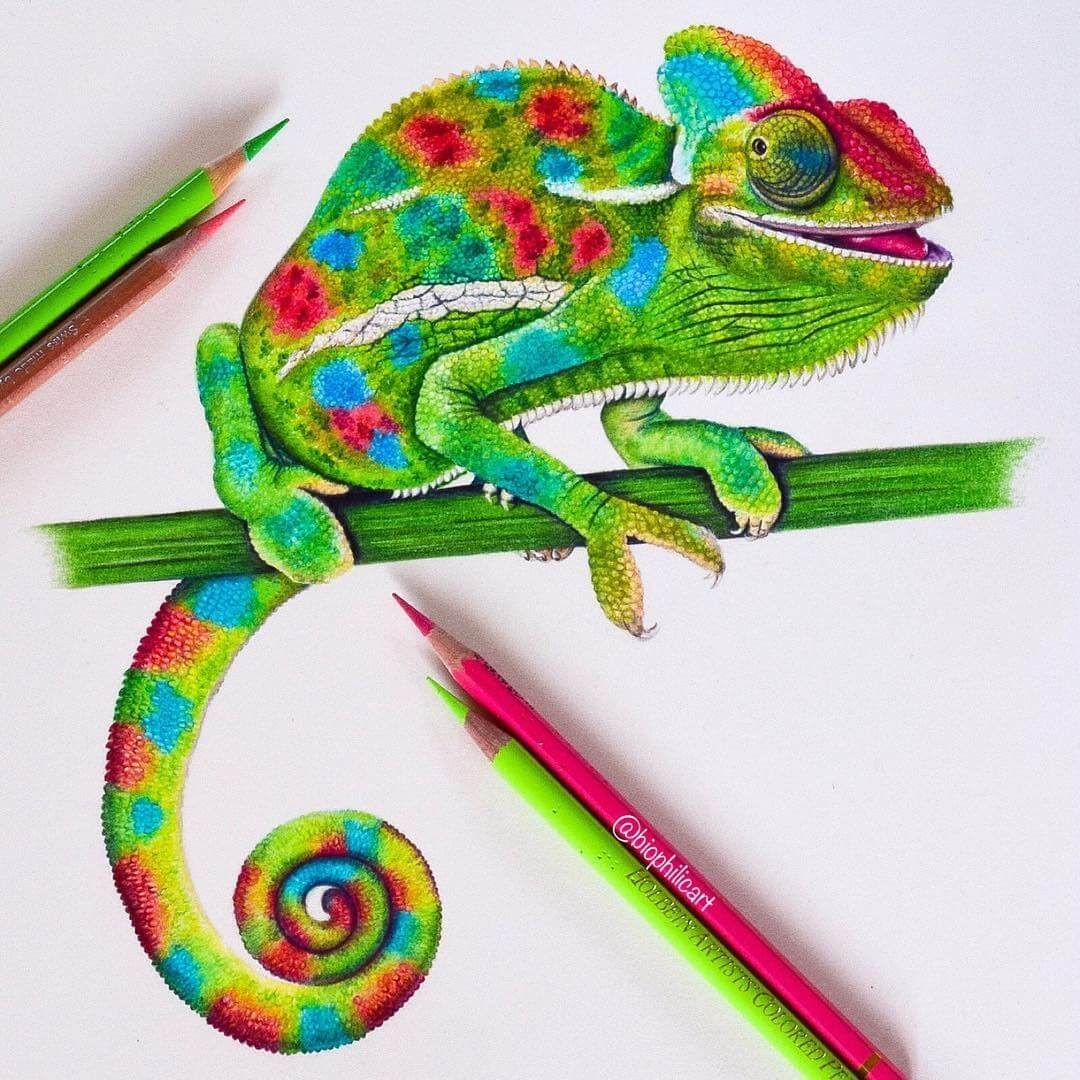 04-Smiling-Chameleon-Sallyann-Brightly-Colored-Animal-Pencil-Drawings-www-designstack-co