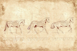 """WTC: Walk, Trot, Canter the Horse's Gaits Revealed"" print"