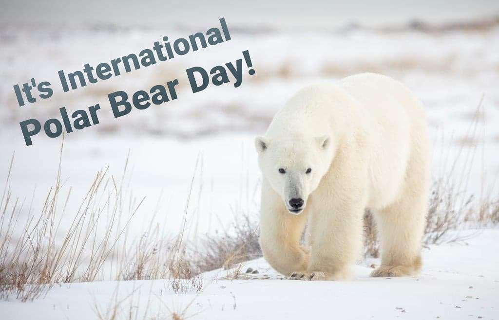 International Polar Bear Day Wishes Pics