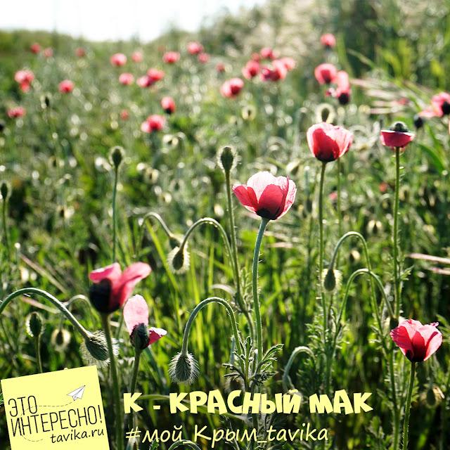 Крым в мае. Цветущие маки