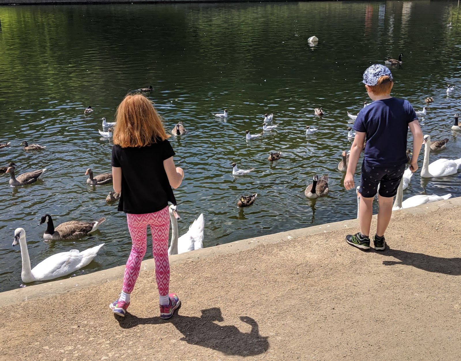 A Short Break in Leeds with Holidays by National Express  - feeding the swans