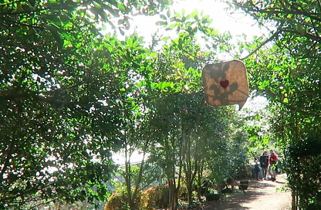 Camellia Hill photo spot