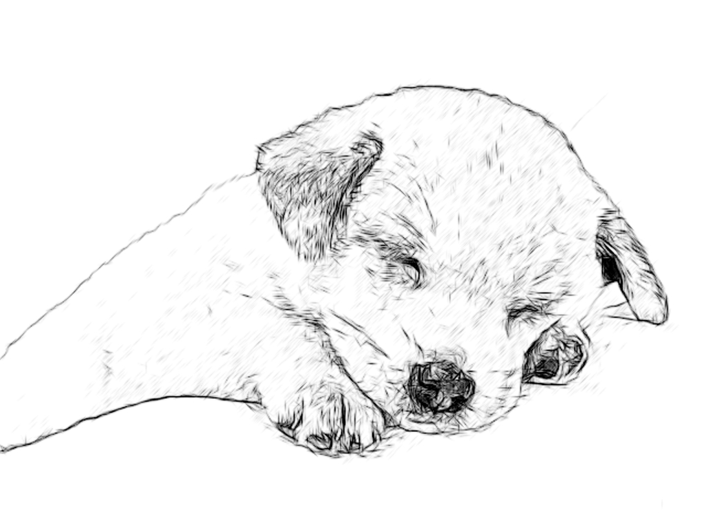 line drawing pencil and charcoal art galleries labrador retriever St. Bernard Puppies labrador retriever puppies pencil charcoal drawings
