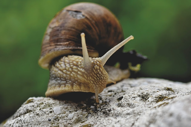 How To Start A Lucrative Snail Farming Business In Nigeria