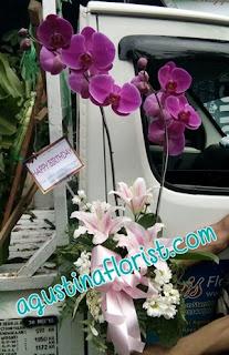 bunga-anggrek-ulang-tahun-surabaya
