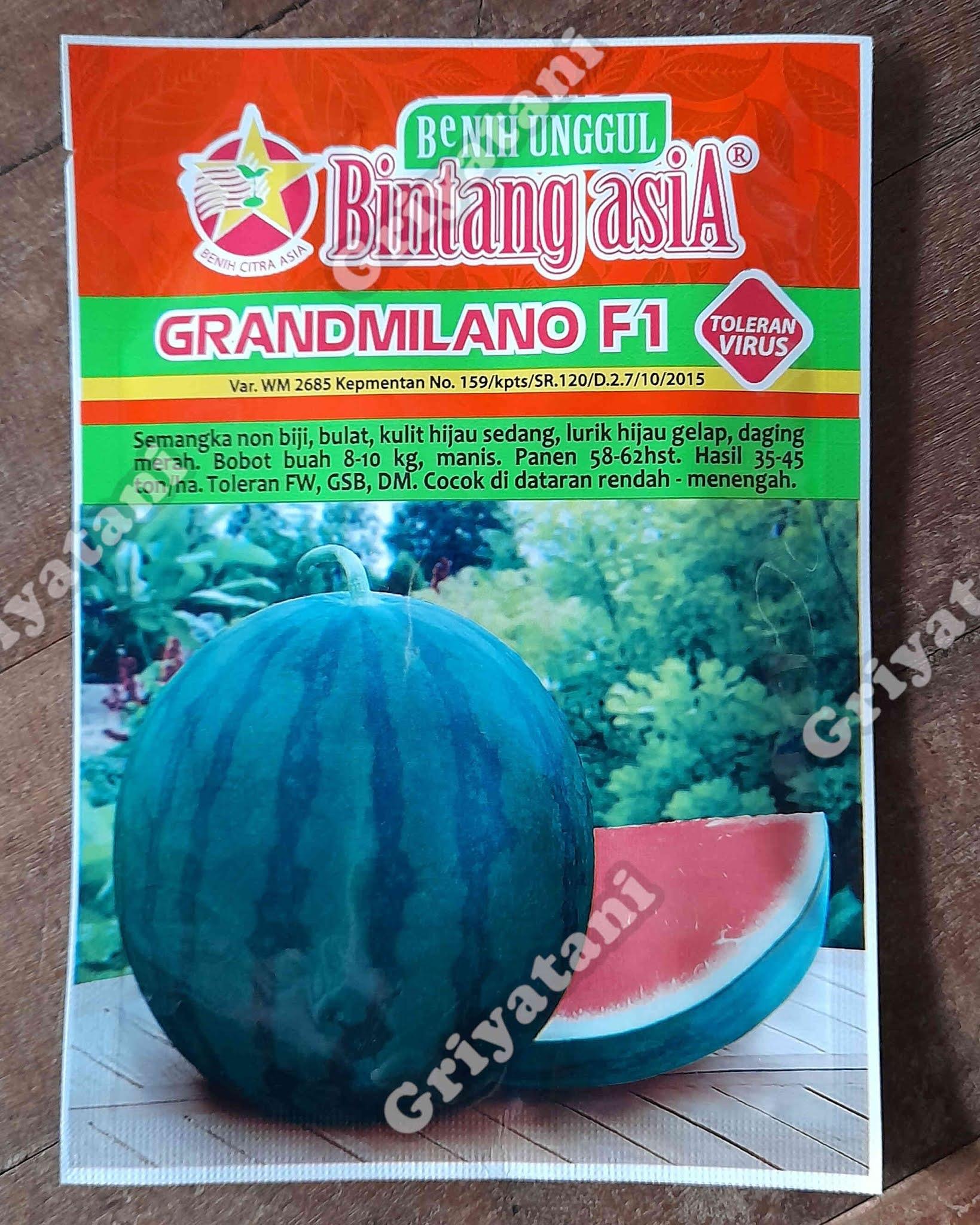 Semangka Grandmilano F1
