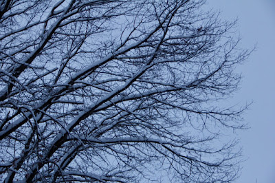 February's snow-covered branches