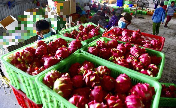 Trung Quốc tạm dừng nhập khẩu thanh long tại cửa khẩu Quảng Ninh - Ảnh: T.Tr