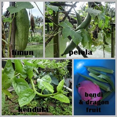 Kutip hasil tani dari kebun sendiri