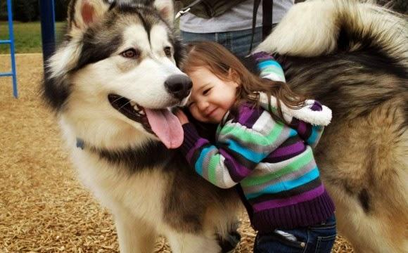 Resultado de imagen para mascotas con humano