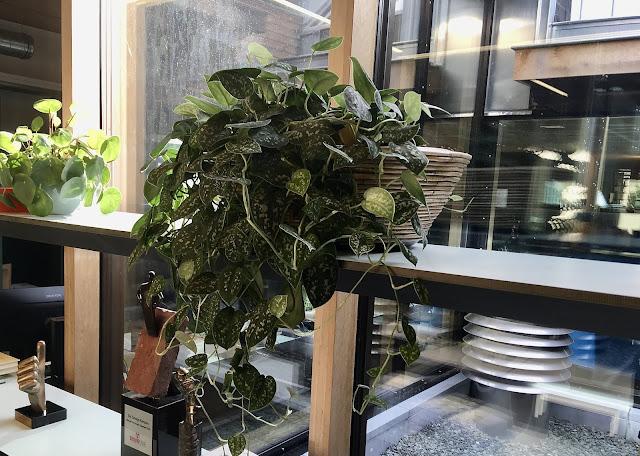 Retro plantenbak vintage plantenbakken in hout riet stro steigerhout beton steen metaal
