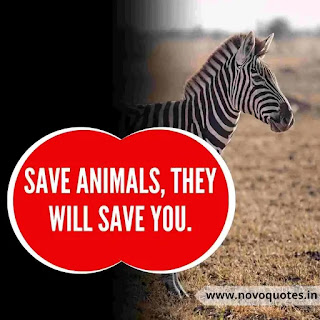Save Wildlife Drawings Slogans