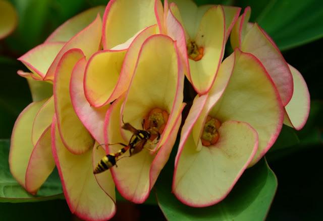foto serangga di bunga