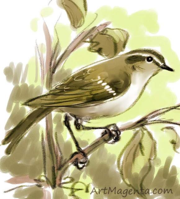 Greenish Warbler sketch painting. Bird art drawing by illustrator Artmagenta.