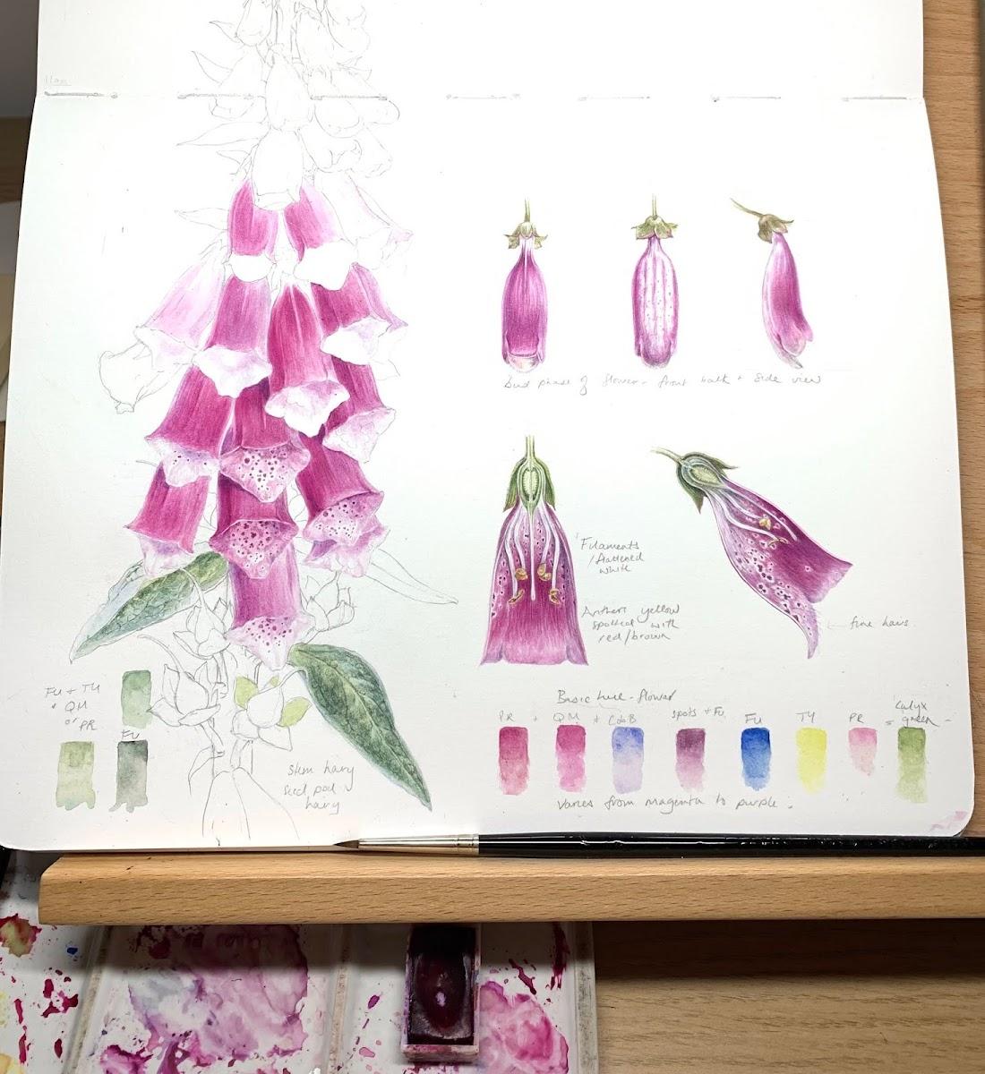 Beginning in Botanical Art and illustration