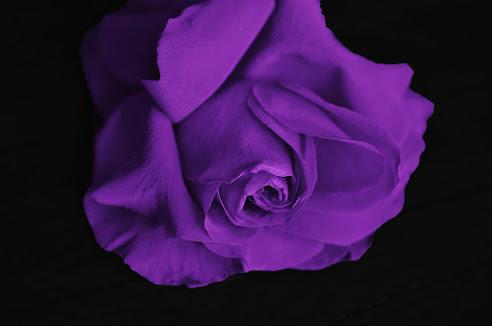 أحلى الورود ورق حائط 21