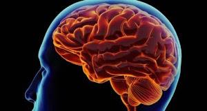 Cara yang Boleh Dilakukan Kolesterol ke Otak Kita
