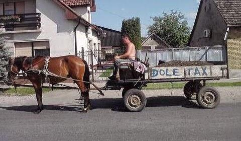 Lustige Bilder Pferdekutsche