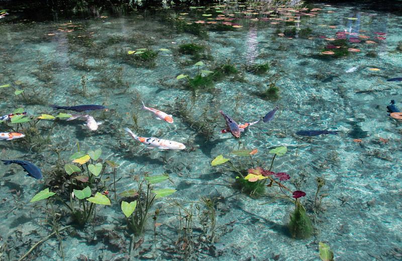 Japan Pond