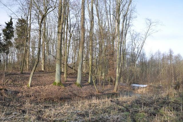 Wczesnośredniowieczne grodzisko pierścieniowate we wsi Rudka